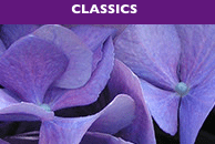 SCENTSY CLASSICS | Scentsy Fragrance Finder ~ Find your Fragrance
