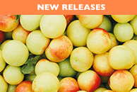SCENTSY NEW RELEASES | Scentsy Fragrance Finder ~ Find your Fragrance