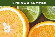 SCENTSY SPRING & SUMMER SCENTS | Scentsy Fragrance Finder ~ Find your Fragrance