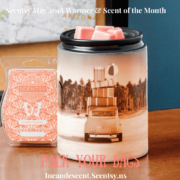 Scentsy Warmer And Scent Of The Month Scentsy 174 Buy