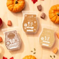 GOURDGEOUS PUMPKIN SCENTSY BAR HARVEST PAK 1 1