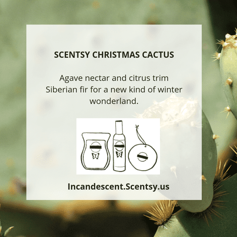 SCENTSY CHRISTMAS CACTUS   SCENTSY 2019 ScenTrend - Woods Fragrances