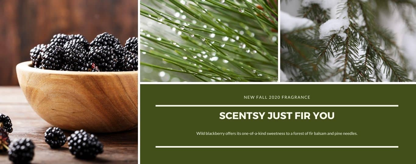 SCENTSY JUST FIR YOU FRAGRANCE