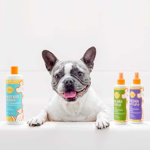 SCENTSY PETS FALL 2019