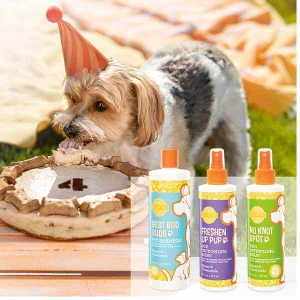 SCENTSY PETS FALL 2021 1 1