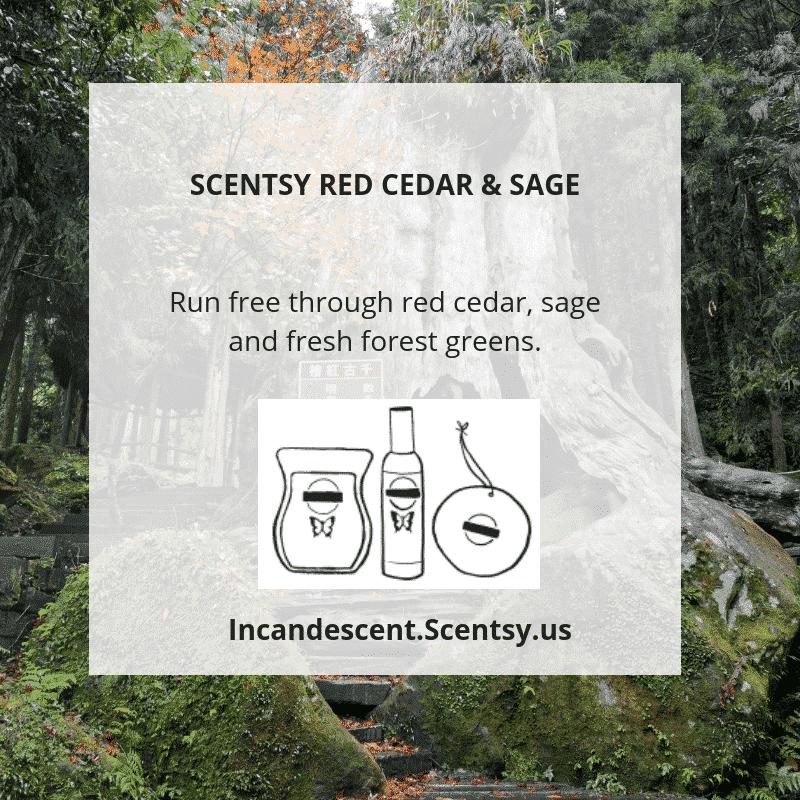 SCENTSY RED CEDAR & SAGE (1)   SCENTSY 2019 ScenTrend - Woods Fragrances