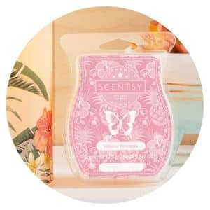SCENTSY SHOP NEW RELEASES