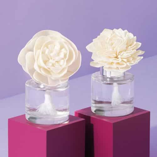 SCENTSY SOLA FLOWERS FALL 2020 SHOP NOW
