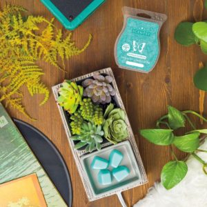 Scentsy May 2021 Warmer & Scent of the Month | Suc-Cute-Lent Scentsy Warmer & Palm Trees & Ocean Breeze